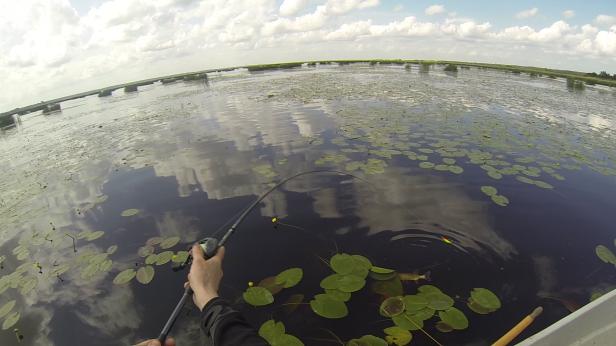 Līdakām patīk sekli un zāļaini ezeri. Šādas vietas ar ūdensrozēm gandrīz droši signalizē, ka kaut kur tur apakšā mitinās zaļsvārce.